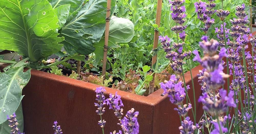 Hochbeete aus Cortenstahl können gegen Schnecken helfen!